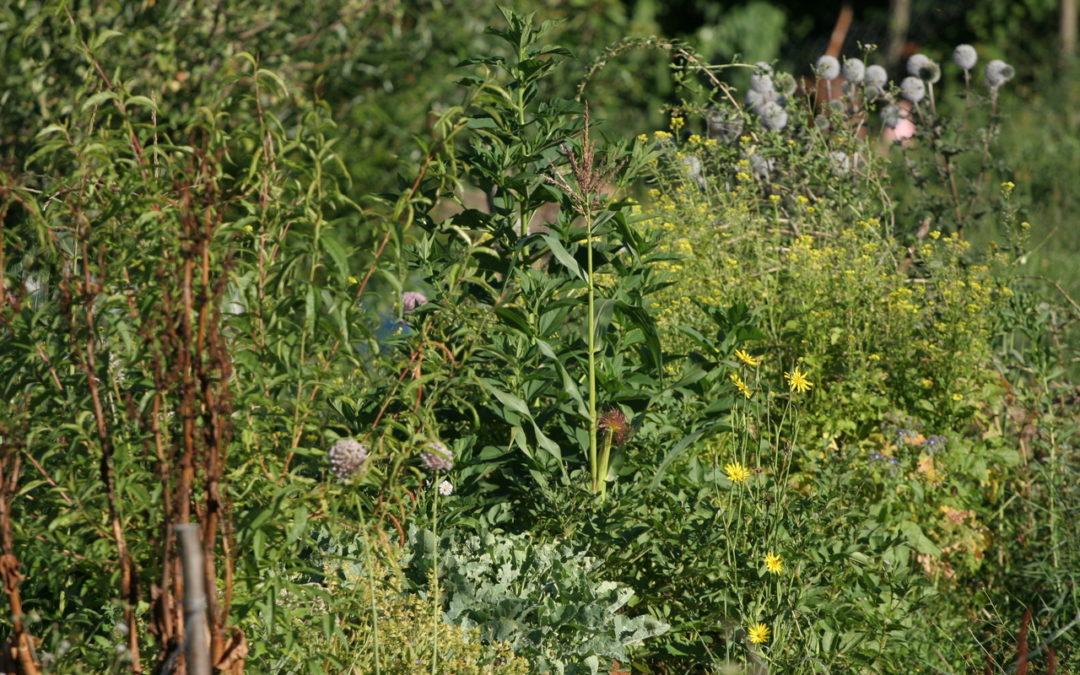 Création d'un Jardin familial en Permaculture