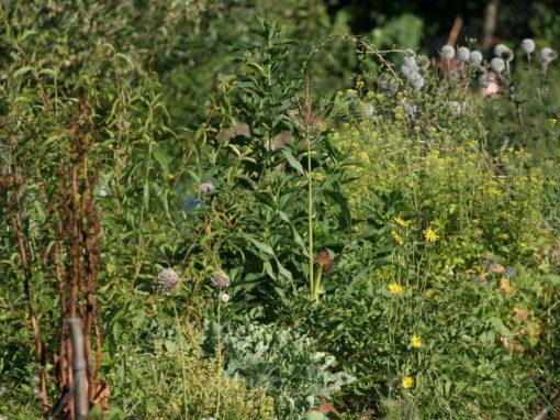 ekosystem paysage comestible permaculture et biodiversit en savoie