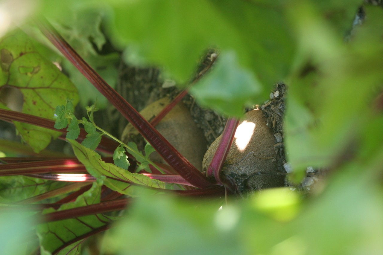Jardin en permaculture savoie