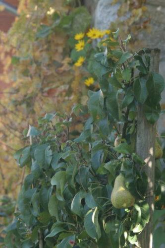 jardin vivrier en permaculture