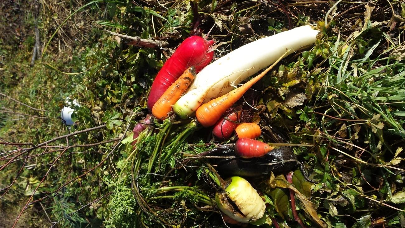 Ekosystem est une structure de conseil, conception et animation en permaculture. Paysage comestible, et biodiversité en savoie