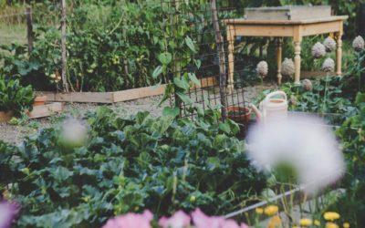 Conseil aux jardiniers et permaculteurs débutants