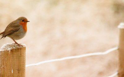 Permaculture et approche naturel au jardin – Février