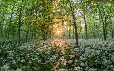 Permaculture et approche naturel au jardin – Mars
