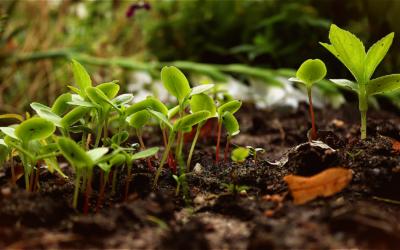 Permaculture et approche naturel au jardin – Mai